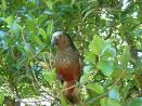 A visit to Kapiti Island Nature Reserve