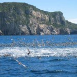 Snorkelling at the Poor Knights Islands – the Perfect Day…