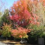 Turangi in Autumn