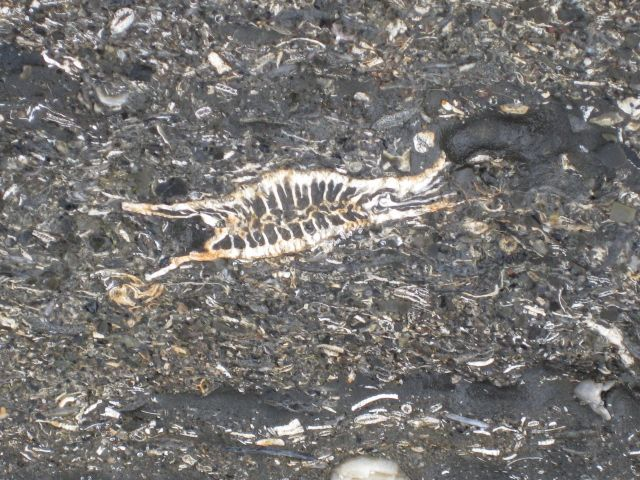 Travels with the fossil hunters essay