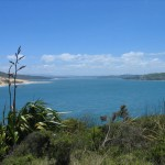 Fossil finding  – another way to travel in New Zealand