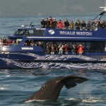 Whale-Watching in Kaikoura NZ – Experience of a Lifetime