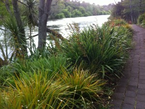 Waikato River Trail in Spring
