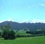 Walking on Mt Pirongia – you can do it hard, or easy…