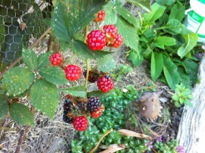 berries at rowan Cottage