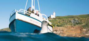 Monarch Cruise to see Albatross