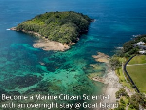 Blue Voluntours at Goat island