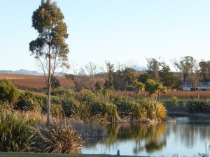 Peter Yealands Wetlands and Vineyards