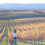 Wine – Organic and Marlborough