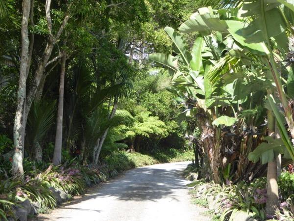A bushclad driveway