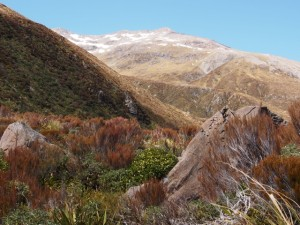 Otira Valley Walkway