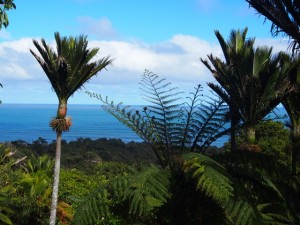 Tasman Sea through Nikau at Te Miko Glass