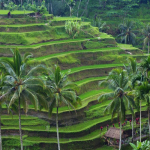 Ubud Bali – Making the Most of a Day